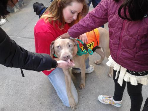 ASPCA Holds Animal Rescue Drive In Upper West Side
