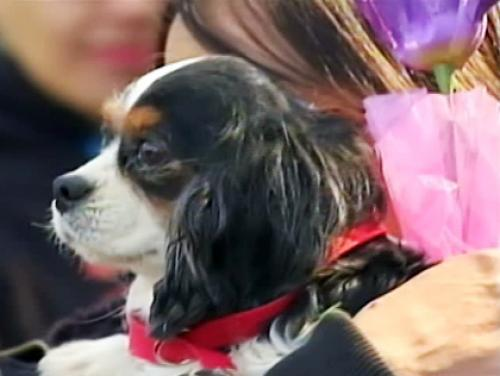 160 Dogs Rescued From Midwest Puppy Mills Arrive In New York
